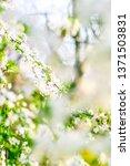 floral beauty  dream garden and ... | Shutterstock . vector #1371503831