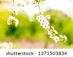 floral beauty  dream garden and ... | Shutterstock . vector #1371503834