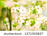 floral beauty  dream garden and ... | Shutterstock . vector #1371503837