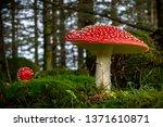 Red Fly Mushroom On Green...