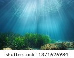 Natural Sunlight Underwater...