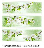 three nature banners with... | Shutterstock .eps vector #137166515