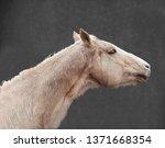 equine portrait 2 | Shutterstock . vector #1371668354