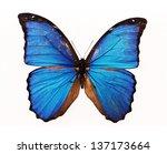 Beautiful Blue Butterfly...