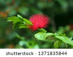 beautiful flora and faunas of... | Shutterstock . vector #1371835844