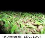 green garden nature | Shutterstock . vector #1372011974