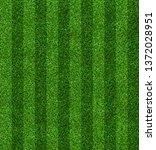 Green Grass Field Background...