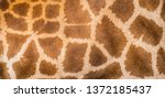 Close Up Of A Giraffe Skin...