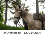 2017 05 16 russia  pyatigorsk.... | Shutterstock . vector #1372192007