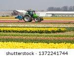 Noordwijkerhout  The...