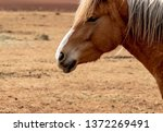 portrait of a beautiful horse... | Shutterstock . vector #1372269491
