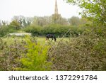 bluntisham  cambridgeshire  uk  ... | Shutterstock . vector #1372291784