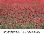 blloms field  somewhere in...   Shutterstock . vector #1372365107