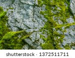 Moss On A Rock Face. Relief And ...