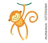 cute funny marmoset swinging on ... | Shutterstock .eps vector #1372531064