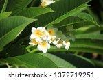 background natural garden green | Shutterstock . vector #1372719251