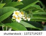 background natural garden green | Shutterstock . vector #1372719257