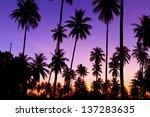silhouette of coconut trees | Shutterstock . vector #137283635