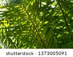 close up over green palm trees... | Shutterstock . vector #1373005091