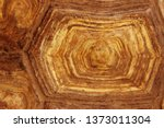 Stock photo blurred pattern of tortoise shell cropped shot of tortoise shell blurred abstract nature 1373011304