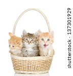 Stock photo three small kittens in a basket isolated on white background 137301929