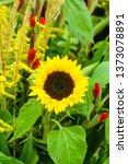 gardening  nature concept.... | Shutterstock . vector #1373078891
