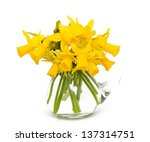 daffodil flowers isolated on... | Shutterstock . vector #137314751
