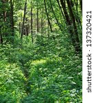 thicket of the forest. | Shutterstock . vector #137320421