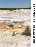 norris geyser basin porcelain in in Yellowstone National Park in Wyoming