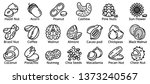 nut icons set. outline set of... | Shutterstock .eps vector #1373240567