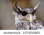 Stock photo photo of an owl in macro photography high resolution photo of owl cub the bureaucratic owl also 1373310851