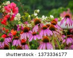 Coneflower can be used as...