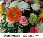 orange gerbera or barberton... | Shutterstock . vector #1373367794