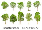 isolated trees on white... | Shutterstock . vector #1373440277