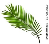 Single Green Leaf Of Palm Tree...