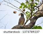 birds that are perched on the... | Shutterstock . vector #1373789237