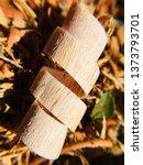 mahogany woodturning chips... | Shutterstock . vector #1373793701