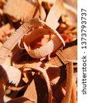 mahogany woodturning chips... | Shutterstock . vector #1373793737