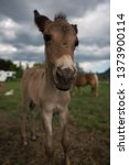 Baby Mule Curious Of...