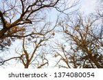 winter snow in the nature | Shutterstock . vector #1374080054