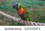 rainbow lorikeet | Shutterstock . vector #137415071