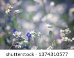 spring blossom background. ... | Shutterstock . vector #1374310577
