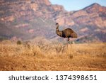 An Emu Stands Along With The...