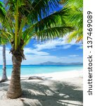 green tree on a white sand...   Shutterstock . vector #137469089