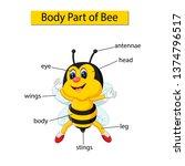 diagram showing body part of bee | Shutterstock . vector #1374796517