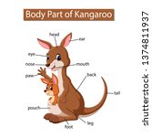 diagram showing body part of... | Shutterstock .eps vector #1374811937