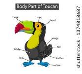 diagram showing body part of... | Shutterstock .eps vector #1374818687