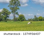 editorial use only  a farmer... | Shutterstock . vector #1374936437
