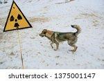 Radiation Warning Sign. Stray...