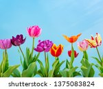 colorful tulips flowers spring... | Shutterstock . vector #1375083824